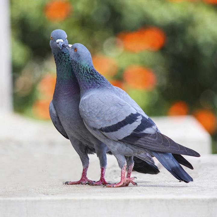 control de palomas en edificios