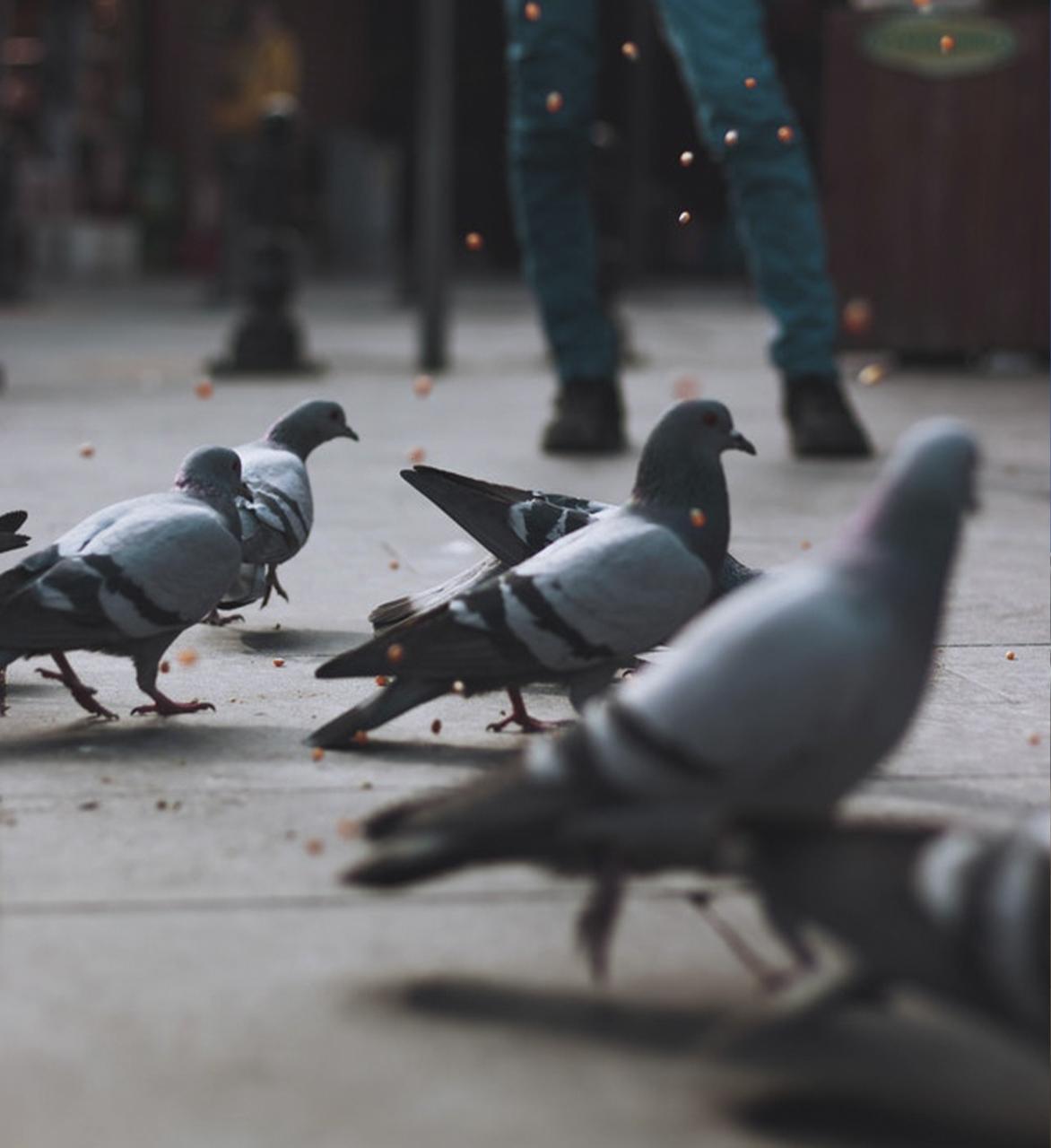 control de aves en aeropuertos
